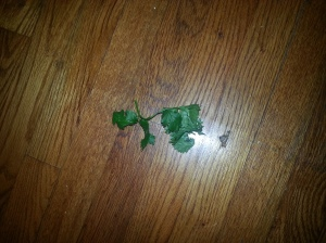 This is cilantro on the floor per Julia Child. I know that the above looks the same, but that's cilantro on the kitchen table. Sorry for the confusion.
