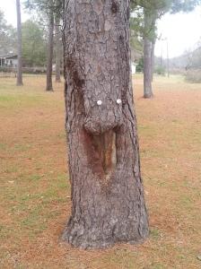 Every park needs a face tree.